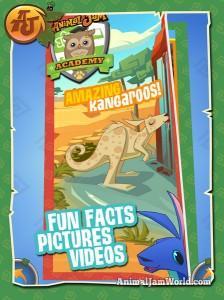 aj-jump-kangaroo-facts
